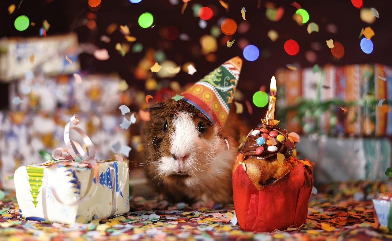 לארגן מסיבת יום הולדת