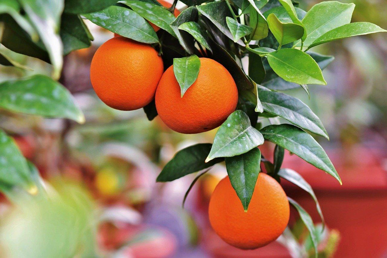 אני רוצה לגדל פירות בגינה שלי - איפה אני לומד לעשות זאת?