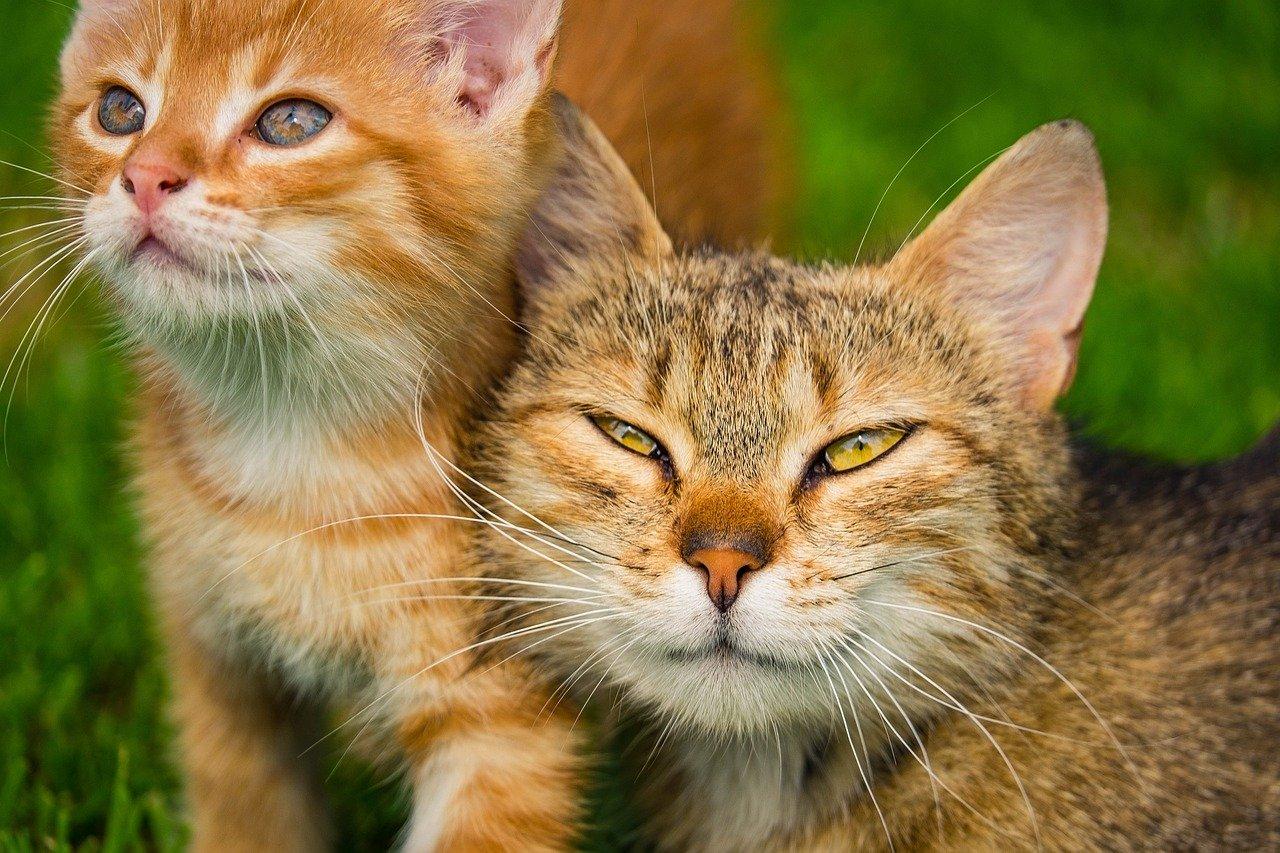 חינוך וטיפול בעזרת בעלי חיים - מה חשוב לדעת על תחום הזואותרפיה?